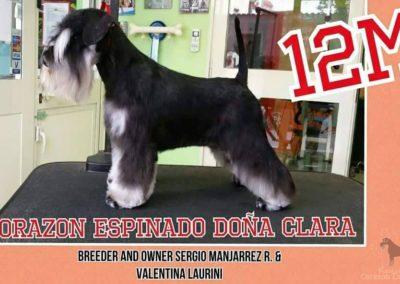 clara2
